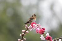 アーチ状の花に - 季節の映ろひ