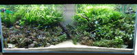 改めて120センチ水槽の写真を - 癒しのアクアライフ
