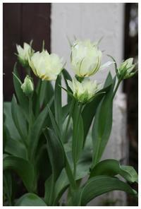 natuの spring garden  - natu     * 素敵なナチュラルガーデンから~*     福岡県で庭の施工、外構造りをしてます