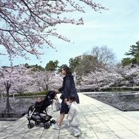 桜山は晴れでした。2017#01 - Yoshi-A の写真の楽しみ