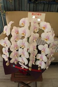 胡蝶蘭お手配できます - 北赤羽花屋ソレイユの日々の花