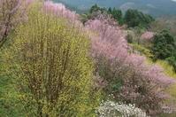 西吉野 「鹿場」「川岸」「西山」 終盤か - ぶらり記録(写真) 奈良・大阪・・・