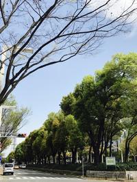 名古屋は松坂屋北館にて「坂本これくしょん-身につける漆-」展! - 坂本これくしょん 公式ブログ | SAKAMOTO COLLECTION BLOG
