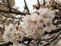春の景色 - 花さんぽ~☆