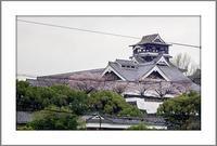 熊本の桜と花々2017(1)〜傷つきながらも震災に耐え抜いた名城を彩る桜 - 前田画楽堂本舗