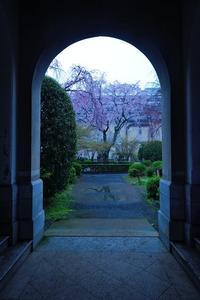 桜便り2017 雨の日桜巡り@京都府庁 - デジタルな鍛冶屋の写真歩記