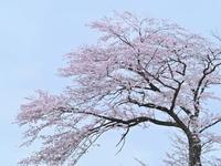 季節を追う - 1/365 - WEBにしきんBlog
