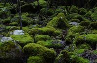 苔生す森 - ふらりぶらりの旅日記