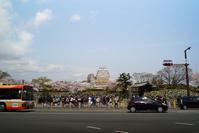 桜の姫路城 - ネコトクラス