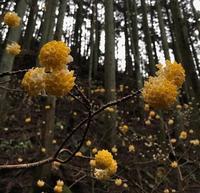 みつまたの森へ♪ - samatwa blog