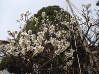 我が家の庭もやっと春爛漫 - 漆器もある生活