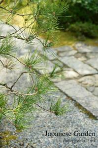 光悦寺の日本庭園 - for  someone