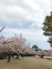 松山城の桜 - owl'sbread