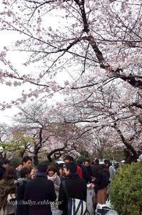 上野公園 - Tullyz bis /R-D1ときどきM