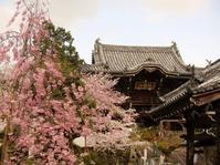 粉河寺の桜と桃畑 - 部長の記録