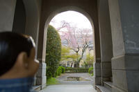 チャーリーのさくら便り2017:その18〜京都府庁旧本館 - チャーリーの部屋
