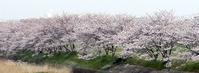 もうすぐ桜吹雪になりますよ♪  - ルーマニアン・マクラメに魅せられて