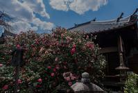椿寺、地蔵院 - 鏡花水月