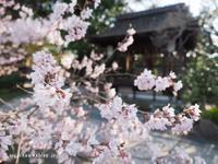 京都御苑の宗像神社♪ - アリスのトリップ