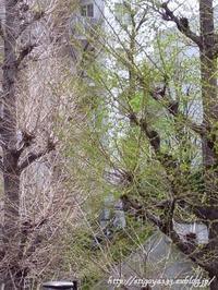 芽吹きの季節 - 丁寧な生活をゆっくりと2