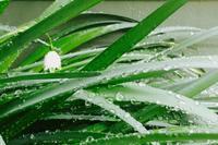 雨に濡れても - 「美は観る者の眼の中にある」