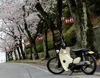 コンビニBIKEと桜!FLJ#53!!CRIMIE入荷!!! - CRIMIEやfuct等のストリートファッション通販|thugrise|ブログ