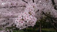 春めく花と動物達 - ヨモギ日記