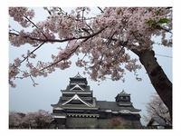 桜 - トムジーのつぶやき3