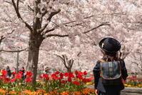 お花見2 - ~遠く 遠く~ chiba