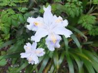 野の花も白 - アオモジノキモチ