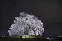 夜 桜 巡 礼 -山梨- - HI KA RI