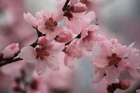 木の花・まとめ - 万願寺通信