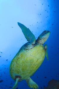 透明度良好 大島海峡ダイビング - 奄美大島 ダイビングライフ    ☆アクアダイブコホロ☆