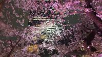 東京ミッドタウンの夜桜 - 東京いけばな日記 花と暮らしと生活と