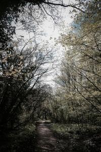 14 再之森 [ 清明 鴻雁北 ] - 四 番 目 の 猫 Tales of Wales 72 Seasons - every day is a present -