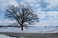 セブンスターの木と雪解けの北瑛の丘 - My favorite ~Diary 3~