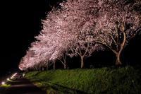 夜桜ライトアップ - アオイソラ