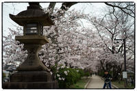 散歩長岡京-35 - Hare's Photolog