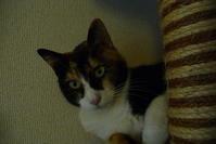 三毛猫ひかちゃん -53- - 殿様の試写室