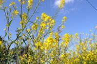 桜端月 寫誌 ⑦ 黄色と桜色…それぞの風景 - le fotografie di digit@l