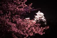 姫路城 夜桜会 - とりあえず撮ってみました
