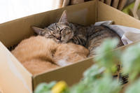 イッちゃんの寝顔 - 猫と夕焼け