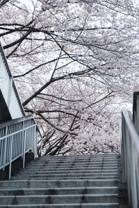 春へようこそ - 幸せな写真時間