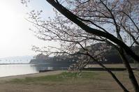 桜 - MATSUDAS
