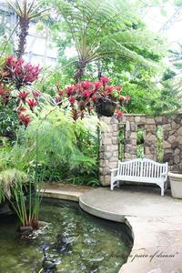 雨の日も楽しめる!相模原公園の「サカタのタネ」温室がすごい。南国編 - a piece of dream*