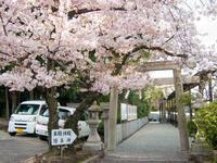 桜満開☆美多彌神社@泉北ニュータウン - 泉北ニュータウンぶらり探索