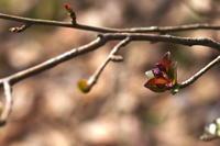 葉っぱ咲く - sharpshooter