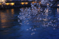 #dp2Q #京都 夜桜 - 関西ウォーカー自遊人 Trial