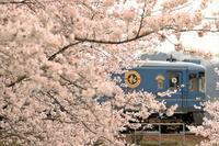 公庄駅の桜 - 今日も丹後鉄道