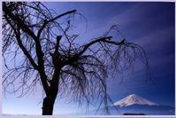 29年4月の富士(9)湖畔の富士 - 富士への散歩道 ~撮影記~